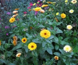jardín alicante
