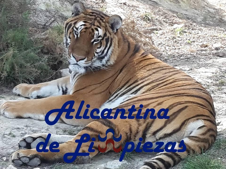 Limpieza Alicante Mascotas
