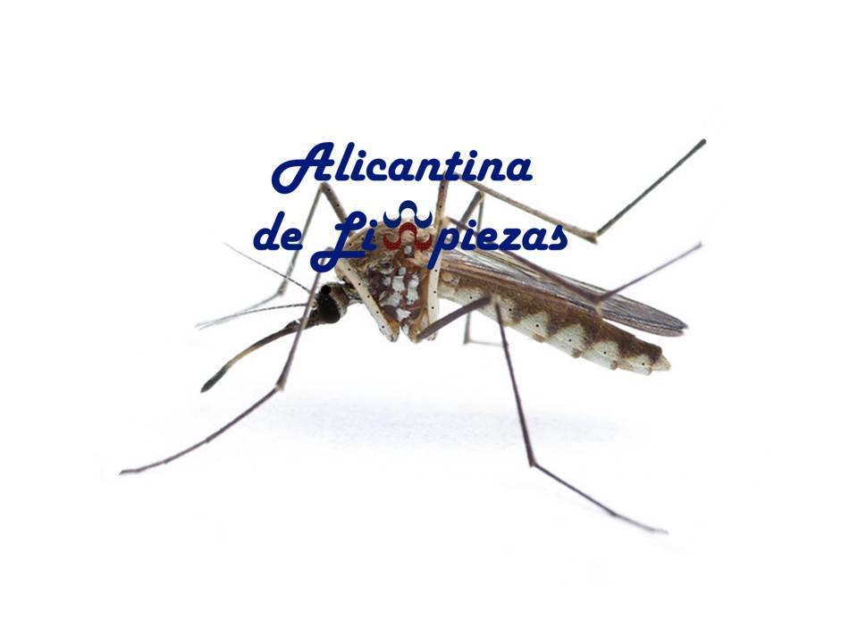 Servicios de Limpieza en Alicante Empresa