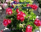 Decorar terraza o patio con Flores