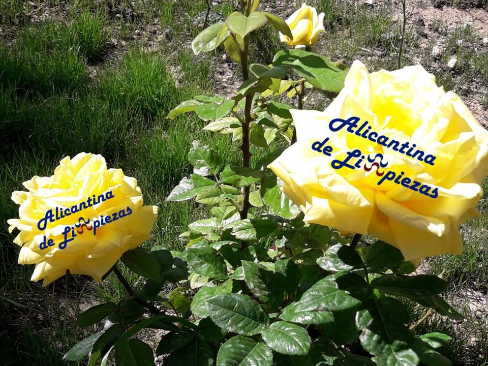 ideas consejos decoracion hogar para terraza o patio con flores y plantas
