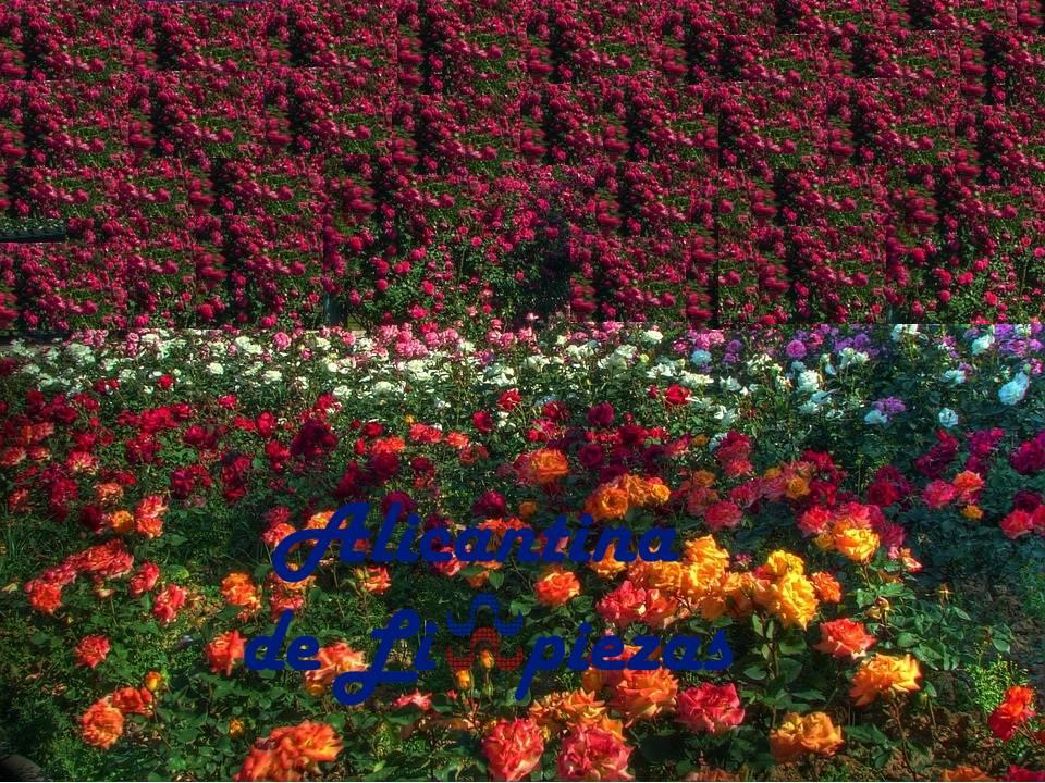 Mantenimiento jardines alicante